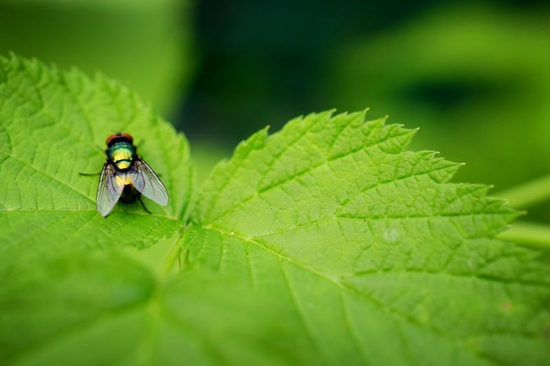 Leaf Plant Part Green Color Invertebrate Animal Insect Animal Themes Animal Wildlife Animals In The Wild Close-up Animal Wing Selective Focus Beauty In Nature Nature Plant