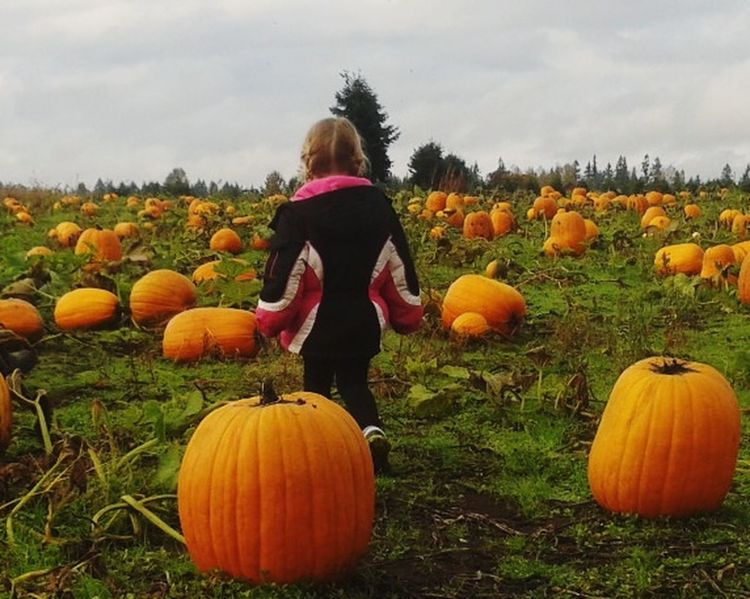 Pumpkin picking Pumpkin Halloween One Person Autumn Child One Girl Only Agriculture Crop  Field Jack O' Lantern Octobercolors Niece 💕 Adventure Buddies Picking Pumpkins The Perfect One!