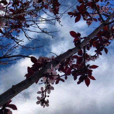 árbol árbol Flores Flowers Cielo Sky Nubes Clouds