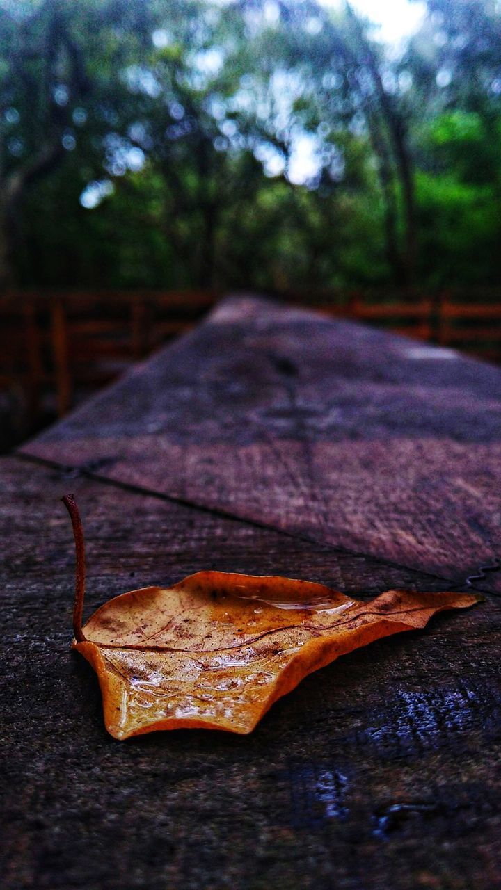 CLOSE-UP OF DRIED LEAF ON WOOD