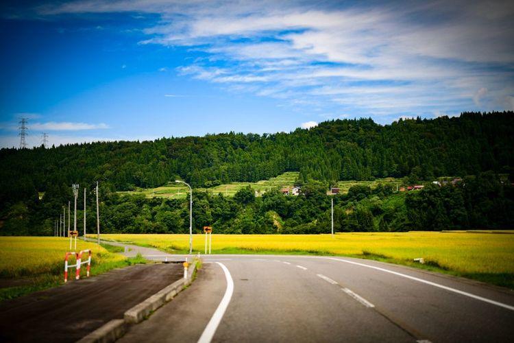 何気ない道路なんだけれどね。歩いたら気持ちが良い。車でも気持ちが良い。 Tree Plant Road Sky Transportation Green Color Nature Cloud - Sky Road Marking Growth Beauty In Nature No People The Way Forward Tranquil Scene Tranquility Day Direction