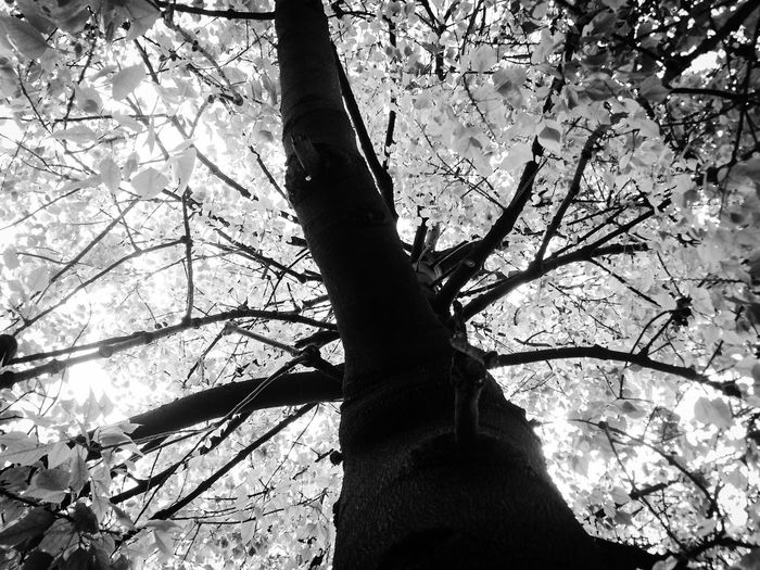 And I still remember 📸 🕸️ Blackandwhite Monochrome Black Vs White Contrast Tree Branch Plant Nature Growth Silhouette Snowing Under The Tree Low Angle View Directly Below Focus On Shadow Beauty In Nature Tranquility Sunlight Urban Nature Streetphotography Hiding From The Sun Out Of Reach Sunscape Treescape Shades Of Grey