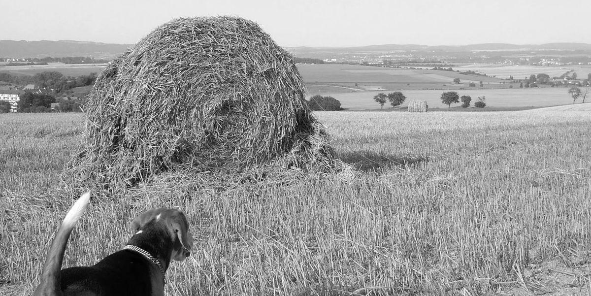 Moritz View Beagle Beauty In Nature Black And White Friday Day Domestic Animals Field Grass Hay Hay Bale Human Body Part Human Hand Landscape Mammal Men Nature One Person Outdoors People Real People Sky Viewpoint