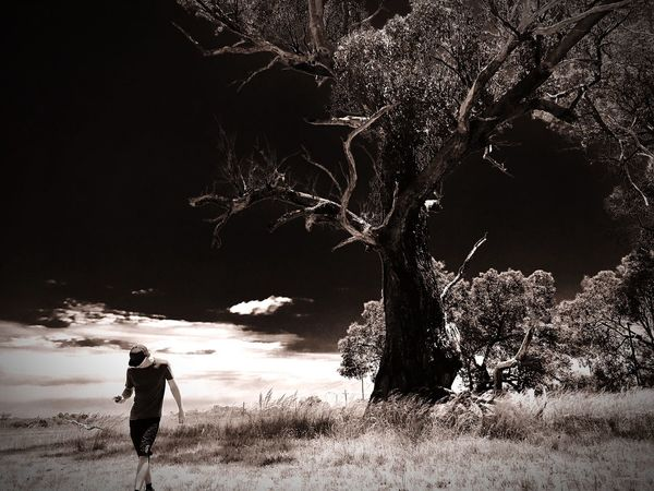 Yellonga Regional Park Nature Tree Outdoors One Man Only Day Landscape Perth WesternAustralia Nature Beauty In Nature Blackandwhite Photography Trees Lonely Negative Effect
