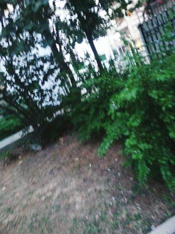 Natural Park Trees Green Green Green!