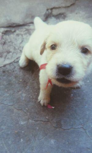 Te voy a amar y me amaras te amo y es mi unica verdad, y es nuestro gran amor lo que nunca morirá Chemademivida Chemahermoso Chemateamo Mydog♡