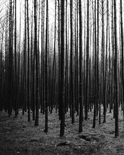 burned woods