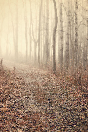 Mysterious Autumn Woods Beauty In Nature Birch Trees Direction Enter Fall Leaves Fall Scene Fog Landscape Mysterious Path Scenics Trail Walk Wanderlust Wisconsin
