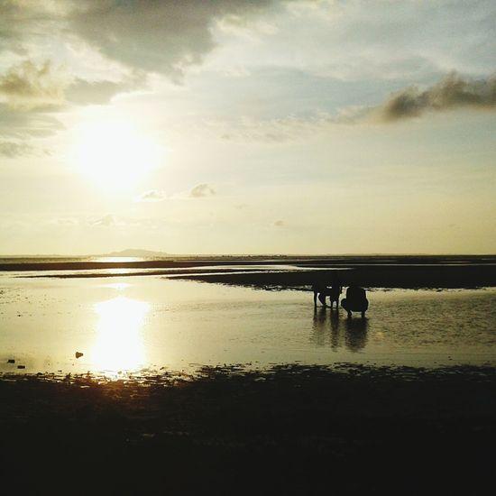 Urban Spring Fever Bangkabelitung Hello World Landscaper Indonesian Beach Island Nature Photography