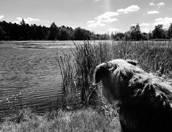 Blackandwhite Holidays Samsung Galaxy S6 Black&white Northumberland National Park Cragside Lake View Sunshine Border Terrier Pet