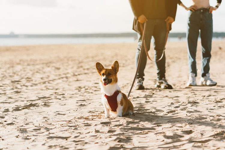 Low section of couple with dog on beach