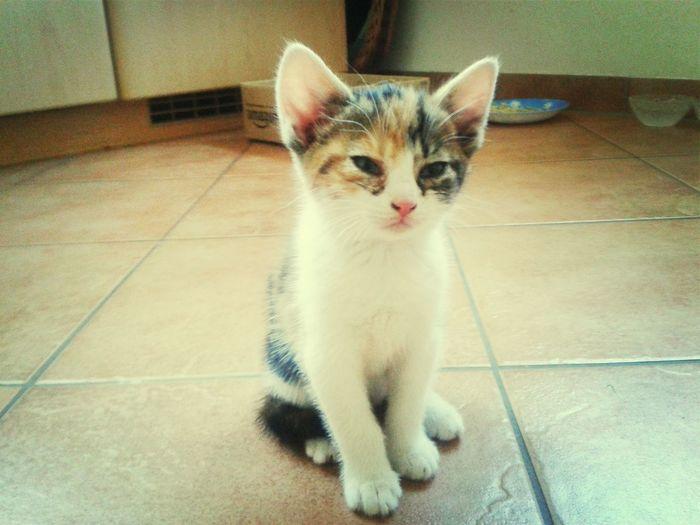Little Cat, Big World
