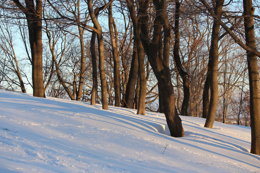 Tree Snow Winter Cold Temperature Forest Tree Trunk Nature No People Landscape Outdoors Day Scenics Beauty In Nature Sky EyeEm Nature Lover High Contrast Light And Shadow Golden Hour