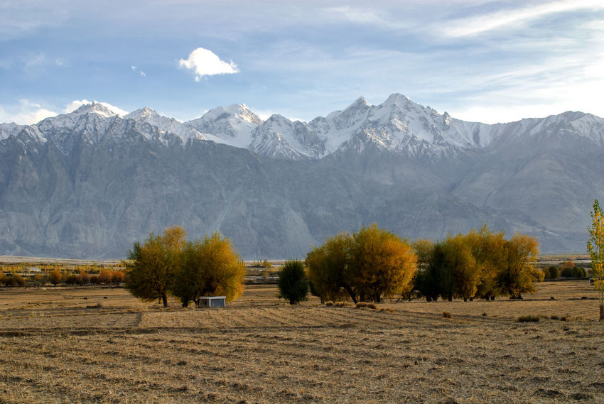 Field Himalayas India Jammu And Kashmir Kashmir Ladakh Landscape Mountain Mountain Range Nature No People Nubra Valley Outdoors Scenery Scenics Tree