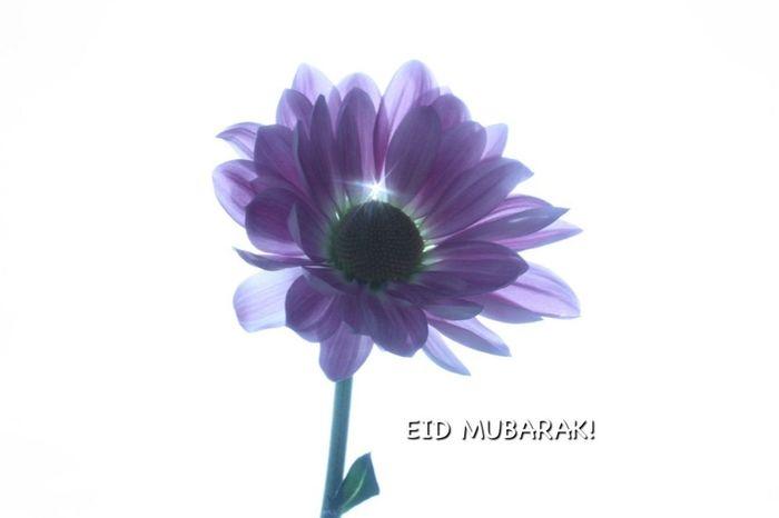HAPPY EID to all my muslim friends on here and all around the world... :) Eidmubarak Flowerforfriends Islam Muslim