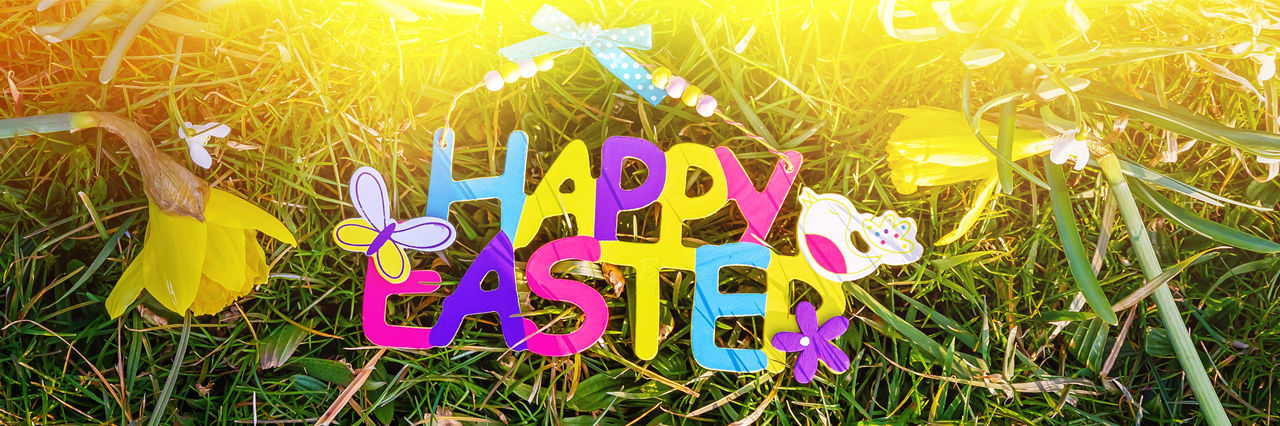 Happy easter Text Sunlight Nature Grass Flower Textured  Easter Easter Cards Colorful Daffodils Card Greetings Greeting Card  Happy Happiness Cheerful Colors Sun Panoramic Banner Season  Gift Outdoors Garden Family