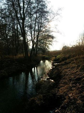 Water_collection Sunshine Nature Sonnenschein