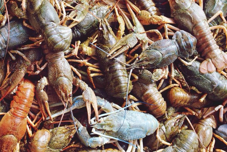 Full frame shot of dead lobsters