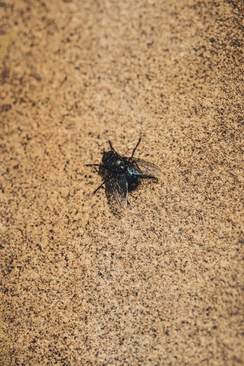 High angle view of black insect on sand