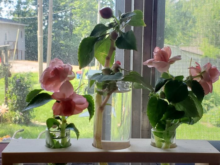 Close-up of flower vase on table by window