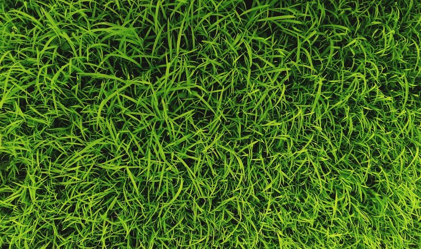 Grass Full Frame Green Color Nature Backgrounds Field Growth No People Outdoors Beauty In Nature Day Freshness Close-up Animal Themes EyeEm Best Edits First Eyeem Photo EyeEm Best Shots Leisure Activity Lifestyles High Angle View Green Color Personal Perspective Freshness Morning Focus On Macro Beauty