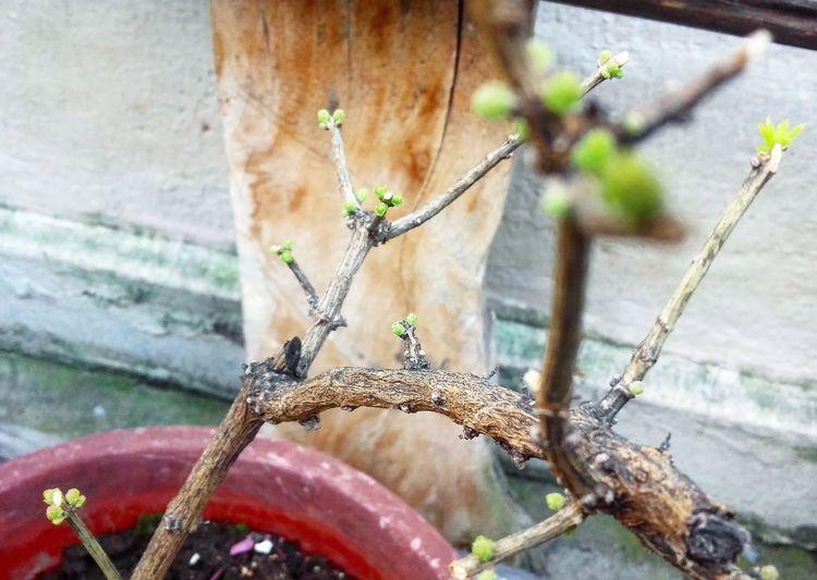Cedron Nature Beauty In Nature Tree Check This Out Taking Photos Bonsai In Training Flowers,Plants & Garden Primeroecuador Ecuadoramalavida Fragility Beauty In Nature Green Color Popular Photos