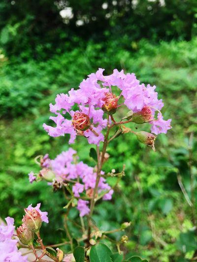 Flower Flowering Plant Plant
