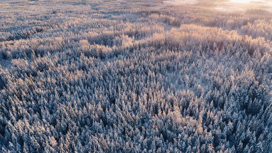 Full frame shot of trees on snow field