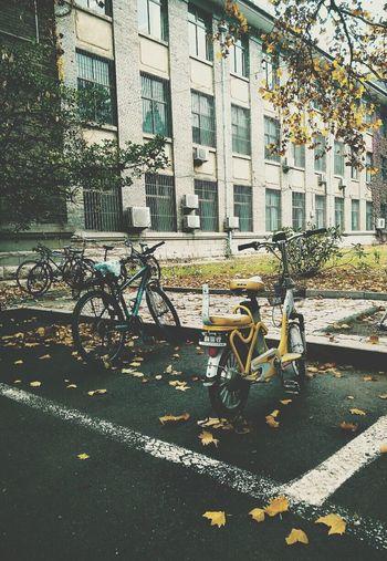 The Drive Environmental Fall University Campus