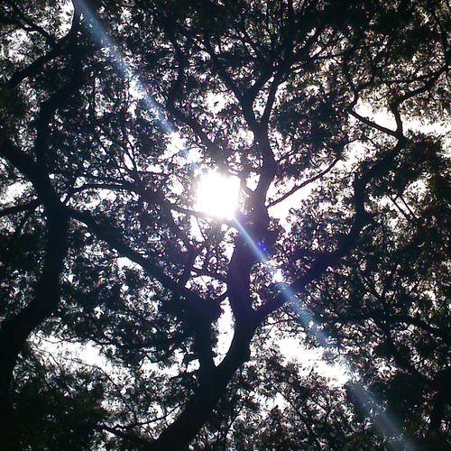 Tree Sun ☀ The