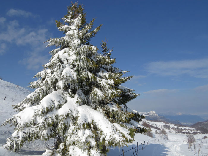 Tree Snow Cold Temperature Winter Nature Sky Scenics - Nature Tranquility Track In The Snow Outdoors Tranquil Scene Coniferous Tree Fir Tree No People Mountain Beauty In Nature Frozen Land The Way Forward