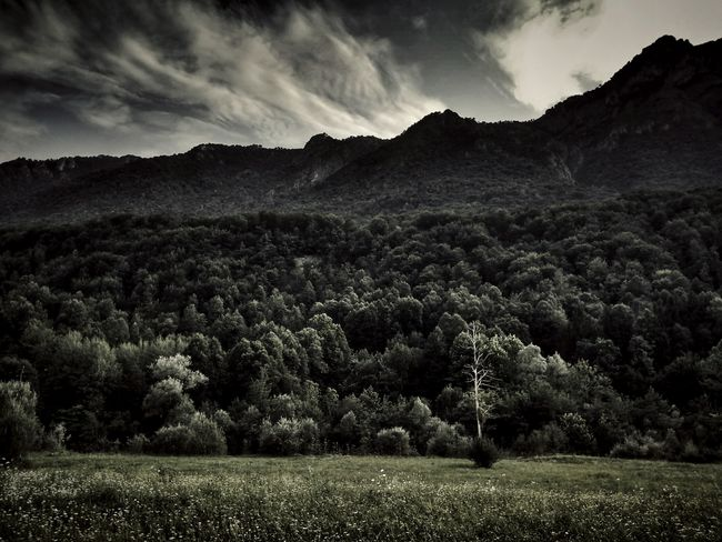 Tree Landscape Nature Outdoors Beauty In Nature No People Sky Day Grass Hight Contrast Tranquility Summer 2017 Summer2017 Italia Italy Scenics Vegetation Mountain Mountain View Italian Mountains Outdoor Photography Sunlight Forest Vertical Forest The Week On EyeEm