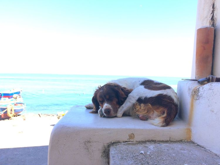 Eolian Islands Eolie Serenity Sea Life Dog Sleeping  Sicily Summmer  Summer Life