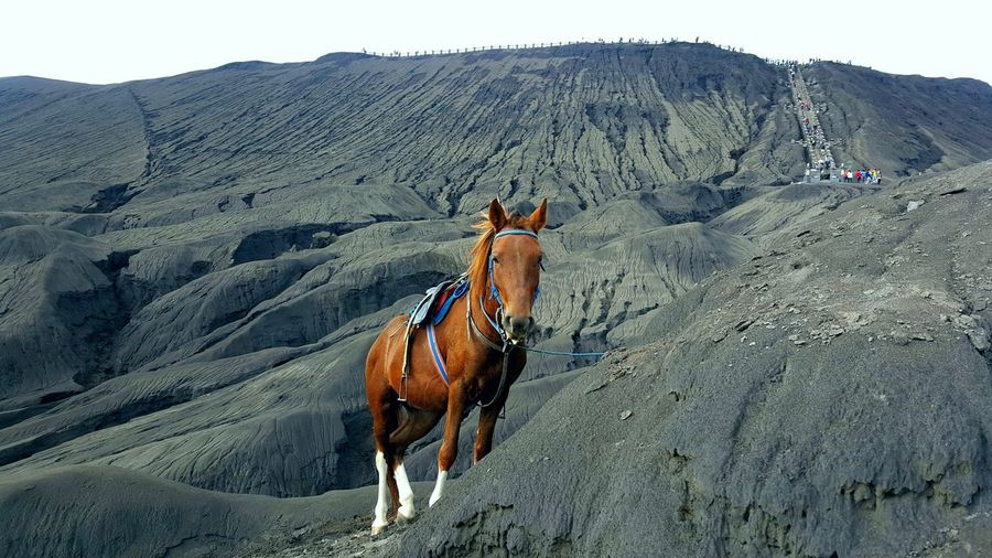 Brown horse on mountain