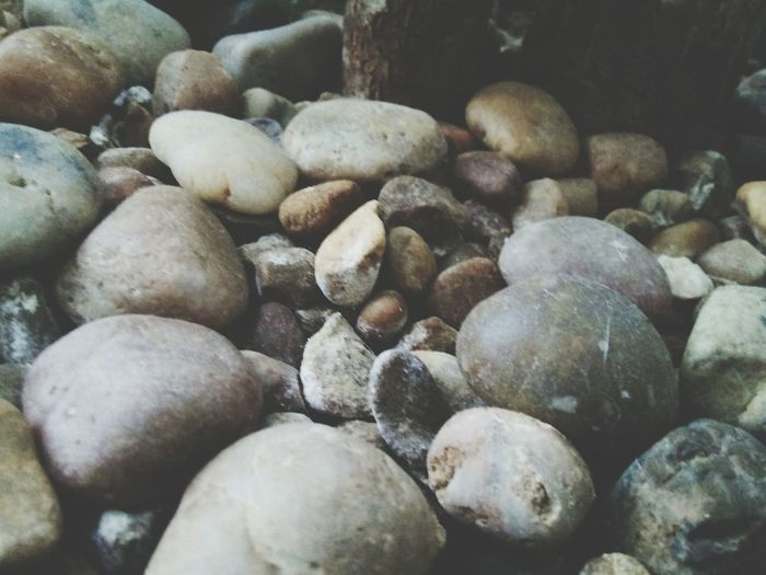 Stones and what tree. Pebble Close-up Beauty In Nature Photography Tree Stones Freshness The Week On EyeEm Breathing Space