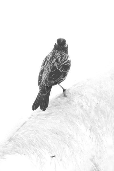 Canon 70d EyeEm The Best Shots My Unique Style Nature_collection Moment Lens Bird 75 -300mm Black & White