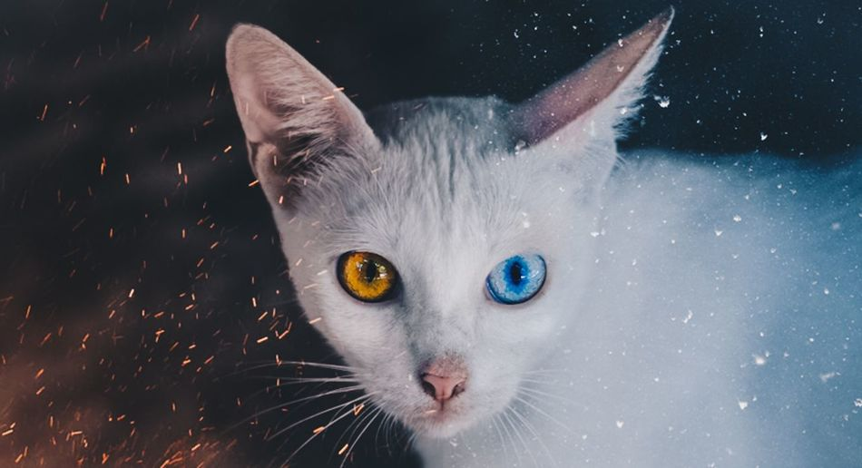 Close-up portrait of cat during snowfall