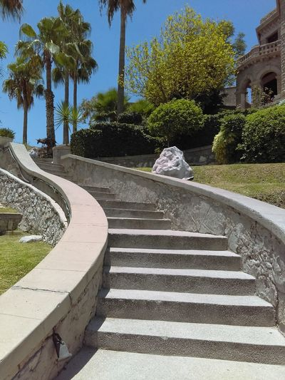 Tree Palm Tree Steps Steps And Staircases Outdoors No People Sky Building Exterior Architecture Museo Museo Casa Del Cerro MexicoTravel Travel Destinations High Angle View Nature Clear Sky Torreón Coahuila, México Naturaleza Urbana Cellphonephotography Torreón, Coahuila Mexico