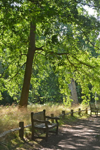 Bench Dappled Sunlight No People Outdoors Path In Nature Pathway Peaceful Place Shadows & Lights Shady Place Shady Trees Trees Trees And Nature