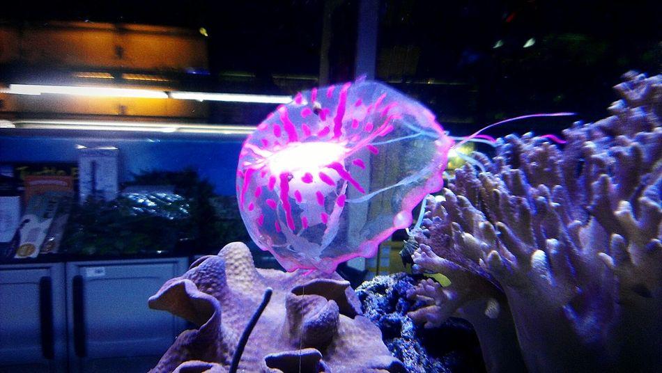 Animals Medusa Acquarium Colors