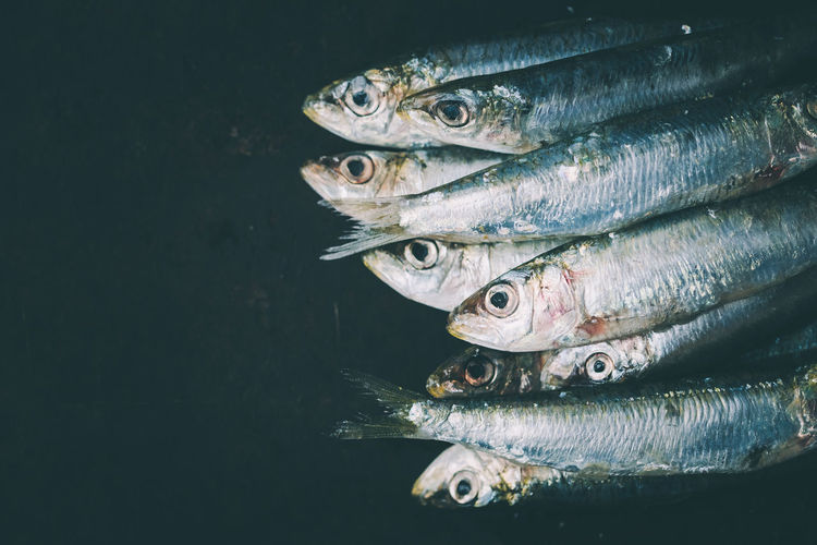 fishes stacked on black background with negative space   daylight photography The Week on EyeEm Animal Black Background Close-up Fish Fisheye Food Food And Drink Freshness Group Of Animals Light And Shadow No People Raw Food Seafood Silver Colored Still Life