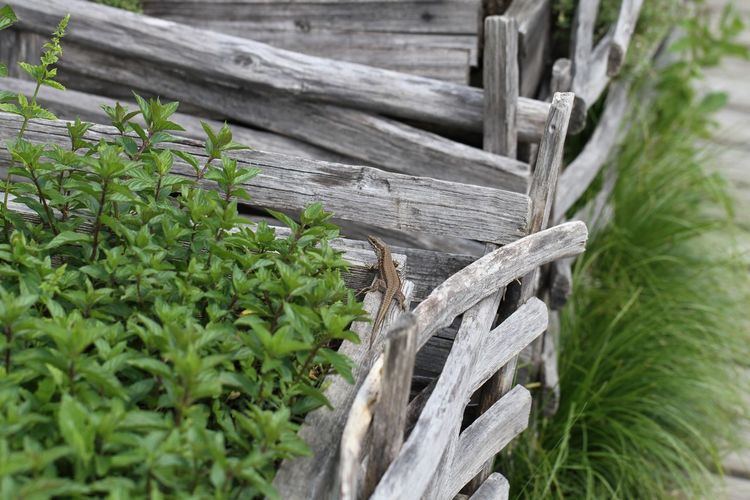 High angle view of wooden fence