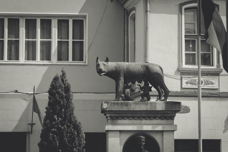 Animal Representation Animal Themes Architectural Column Architecture Building Exterior Built Structure City Day Domestic Animals Façade No People One Animal Outdoors Romulus And Remus Sculpture Statue Window Wolf