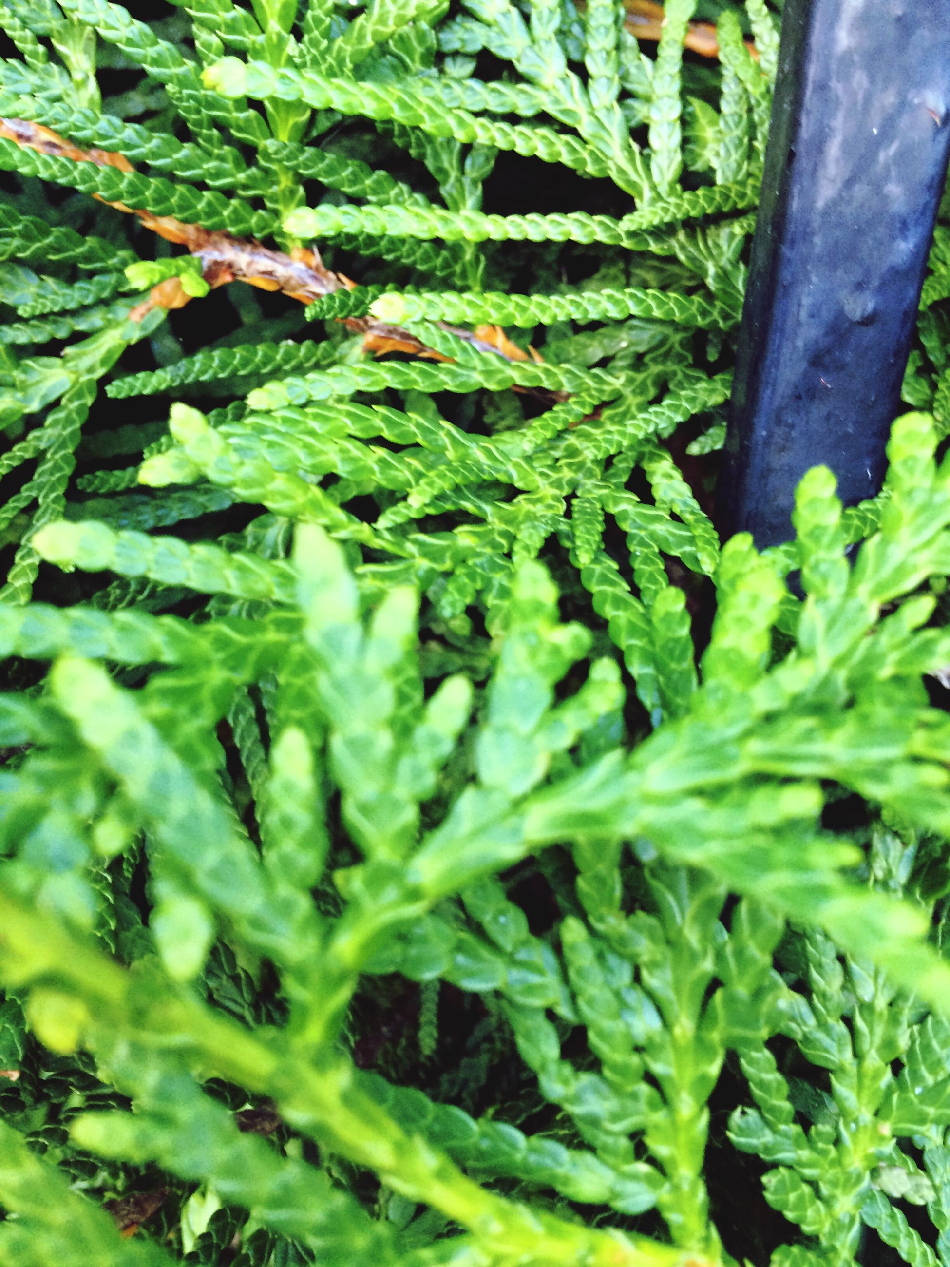 growth, green color, nature, plant, leaf, close-up, no people, day, beauty in nature, outdoors, backgrounds, freshness