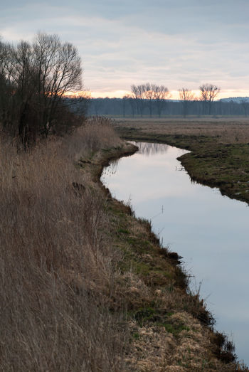 Looking for landscape Agriculture Bare Tree Beauty In Nature Cloud - Sky Day Drainage Drainage Channel Drainage Ditch Monring Sky Nature No People Outdoors Sky Tranquil Scene Tree Water