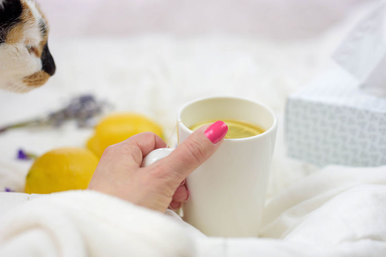 Woman's hand holding cup of hot tea - honey, lemons and tissues on the table - Sick day, cold, flu, fever concept Hot Tea Morning Wellness Cough Cozy Fever Flu Hand Health Honey Lemons Mental Health Day Rest Robe Sick Day Tissues Woman's Hand
