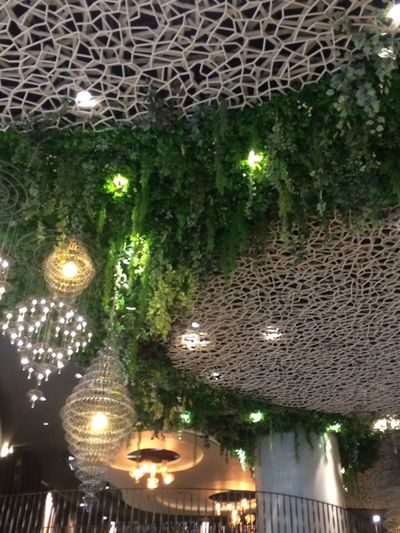 Illuminated Night Lighting Equipment Decoration No People Architecture Water Tree Hanging Built Structure Holiday Reflection Nature Light Green Color Ceiling
