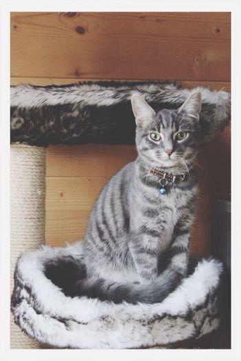 Mon Marley <3 Cat I Love My Cat Chat Enjoying Life