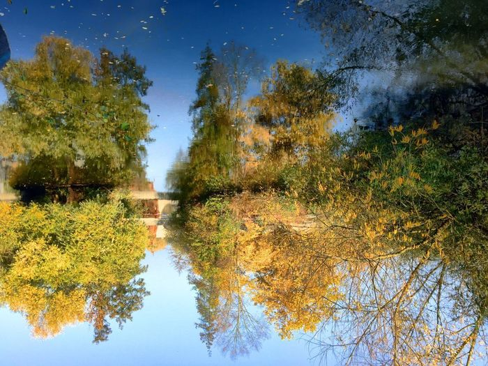 Tree Autumn Nature Reflection Beauty In Nature Sky No People Outdoors Tranquility Germany Leaf Change Growth Tranquil Scene Scenics Day Lake Water EyeEmNewHere The Secret Spaces Live For The Story Lost In The Landscape Perspectives On Nature EyeEm Ready