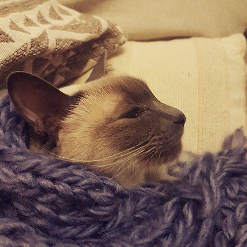 Between wood Cats Of EyeEm Cat From Side View Close-up Cat Domestic Cat Feline Persian Cat  Kitten Siamese Cat